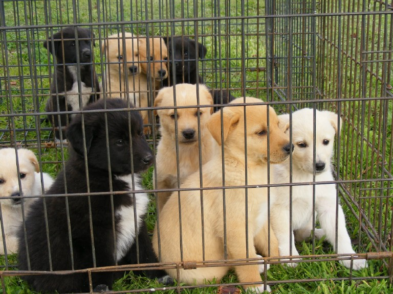 Pics Photos - Border Collie Mix Dog For Adoption In Marion Wisconsin ...