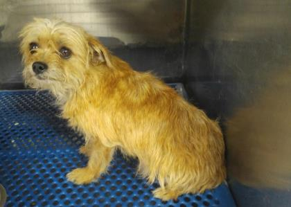 35788620 located in El Paso, TX has an unknown status at ...