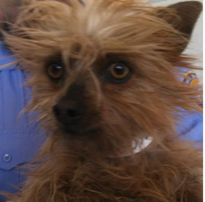 35202176 Located In El Paso Tx Has An Unknown Status At This Time