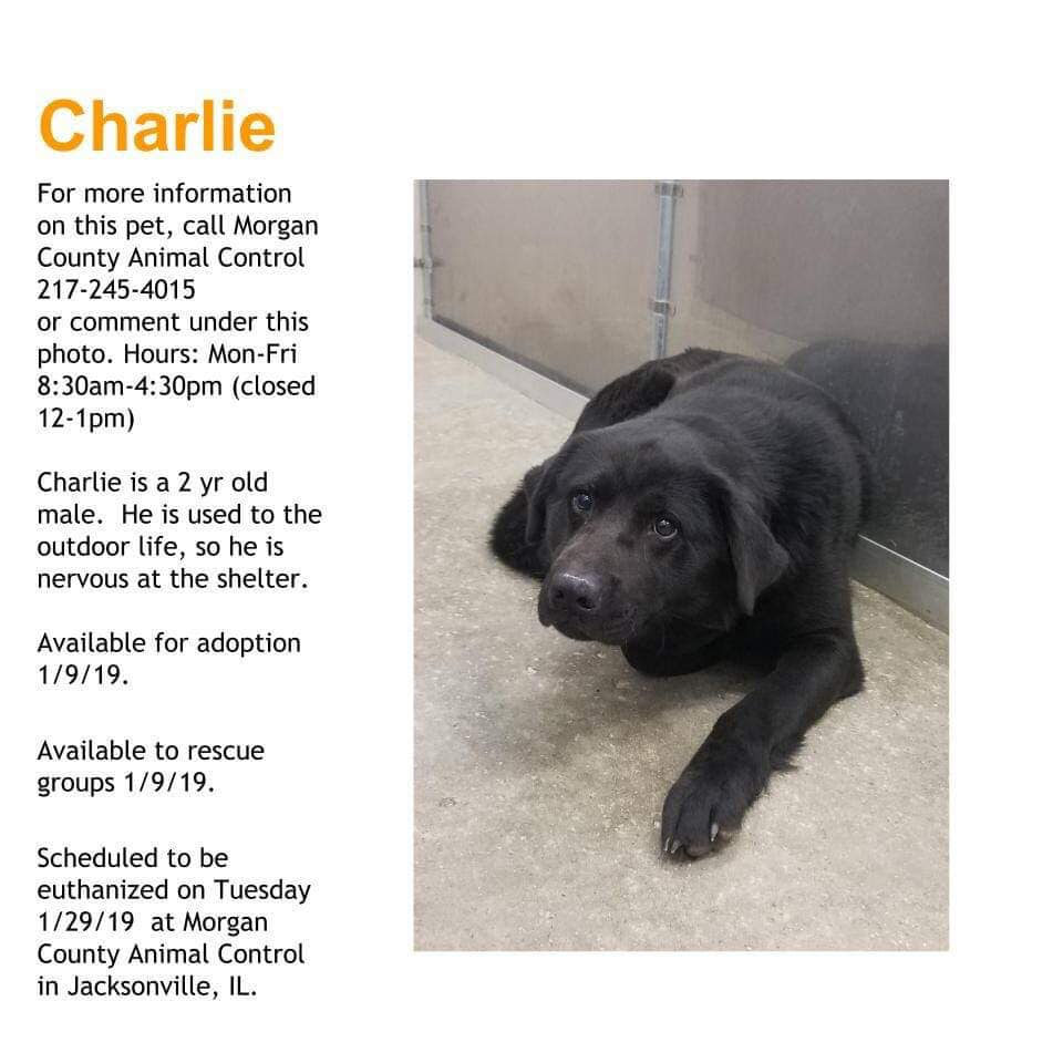 CHARLIE located in Jacksonville, IL was saved