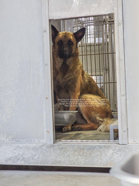 Main Photo of this Dog