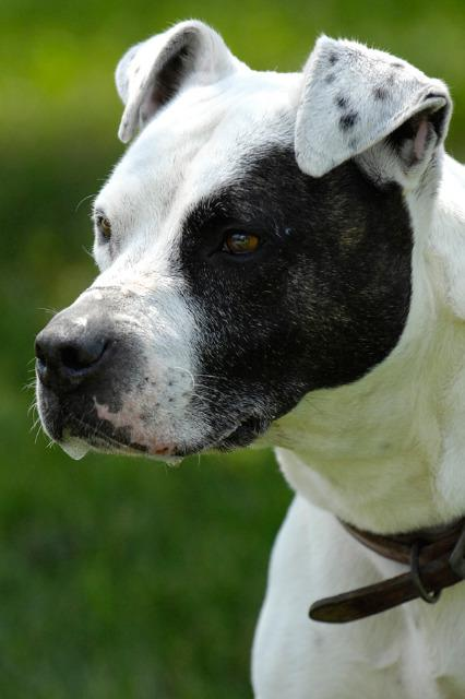 Ringo Located In Johnson City Tn Has An Unknown Status At