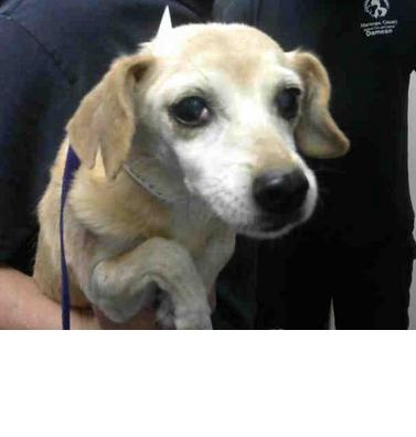 Butterscotch Located In Phoenix Az Has An Unknown Status At This Time