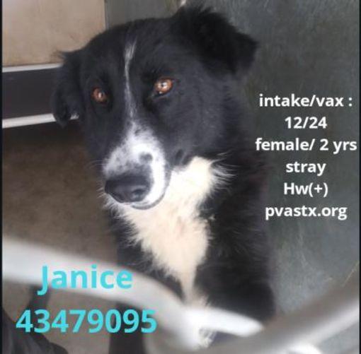 JANICE Located In Edinburg, TX