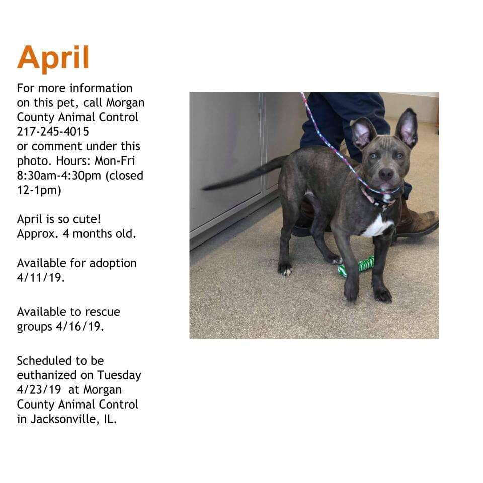 APRIL located in Jacksonville, IL was saved