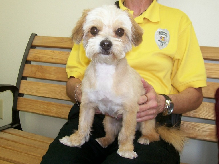 to the yorkie absolutely guide dogs shih a shih for