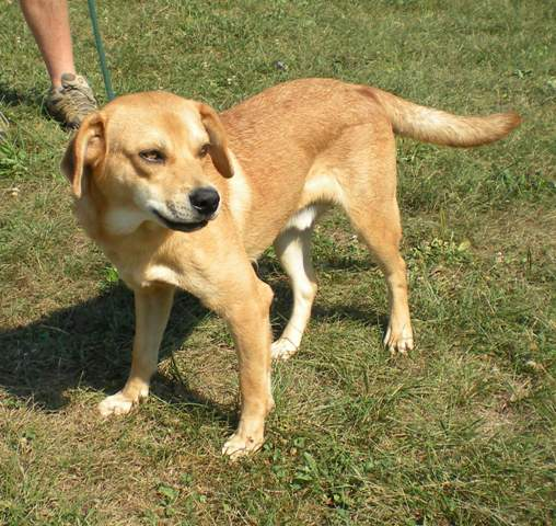 DONALD located in Carlisle, KY was euthanized on Oct 19, 2010!