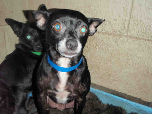 Shadow Located In Los Angeles Ca Was Euthanized On Oct 30 2009