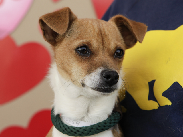 A4233354-SIMON located in Baldwin Park , CA was euthanized on Mar 3 ...